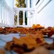 Liście, połamane gałązki, przewrócone doniczki - Jesień zaczyna się od balkonu